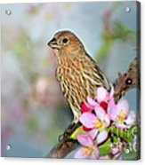 Joy Of Spring Acrylic Print