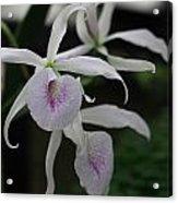 Julie's Orchid Acrylic Print