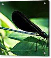July Dragonfly II Acrylic Print