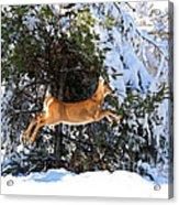 Jumper Acrylic Print