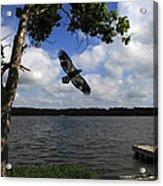 Junenile Eagle Rocky Fork Lake Acrylic Print