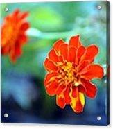 June's Bloom Acrylic Print