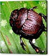 Jungle Beetle Acrylic Print