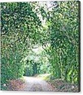 Jungle Drive Avery Island La Acrylic Print