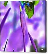 Jungle Iris Acrylic Print