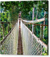 Jungle Walk From High Above Acrylic Print