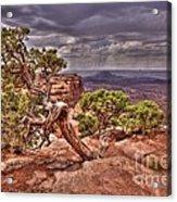Junipers Storm Acrylic Print by John Kelly