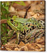 Just A Frog Acrylic Print