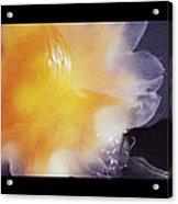Just Peachy The Jellyfish Acrylic Print