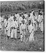 Juvenile Convicts At Work In The Fields Acrylic Print by Everett