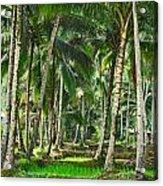 Kabune Acrylic Print