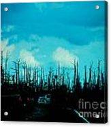Katrina Trees Acrylic Print