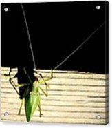 Katydid It Acrylic Print