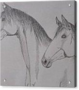 Keiger Mustangs Acrylic Print