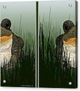 King Frog - Gently Cross Your Eyes And Focus On The Middle Image Acrylic Print
