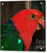 King Parrot - Male 2 Acrylic Print