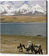 Kirghiz Nomad Leads Bactrian Camels Acrylic Print