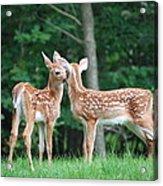 Kiss Me Deer Acrylic Print