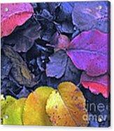 Kiss Of Fall Acrylic Print