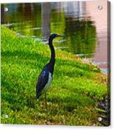 Kissimmee Pond Bird Acrylic Print