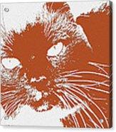 Kit Kat Acrylic Print