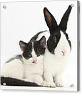 Kitten And Dutch Rabbit Acrylic Print