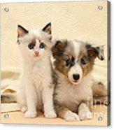 Kitten And Pup Acrylic Print by Jane Burton