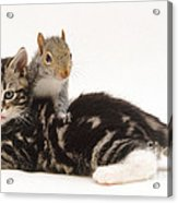 Kitten And Squirrel Acrylic Print by Jane Burton