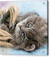 Kitten In Blanket Acrylic Print
