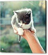 Kitten In Hand, 2010 Acrylic Print by Emily Golitzin