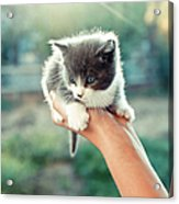 Kitten In Hand, 2010 Acrylic Print