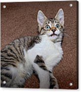 Kitten Laying On Carpet Acrylic Print