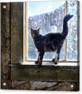 Kitten On Windowsill Of Abandoned House Acrylic Print