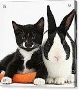 Kitten, Rabbit And Carrot Acrylic Print