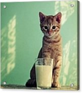 Kitten With Glass Of Milk Acrylic Print