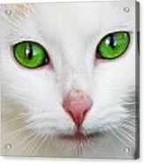 Kitten With Green Eyes Acrylic Print