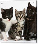 Kittens Acrylic Print