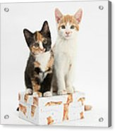 Kittens On Birthday Package Acrylic Print