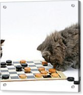 Kittens Playing Checkers Acrylic Print