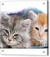 Kittens Under Blanket Acrylic Print
