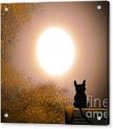 Kitty And The Moon Acrylic Print