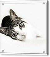 Kitty Cat Greeting Card Get Well Soon Acrylic Print