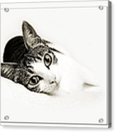 Kitty Cat Greeting Card I Miss You Acrylic Print