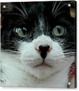 Kitty Closeup Acrylic Print