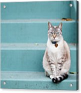 Kitty On Blue Steps Acrylic Print