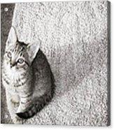 Kitty's Shadow Acrylic Print