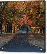 Knox Fall 8554 Acrylic Print