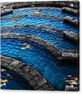 Koi Blue Acrylic Print by Kelly Rader