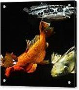 Koi By The Lillies Acrylic Print by Don Mann