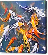 Koi Fish In Pond Acrylic Print